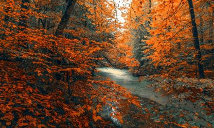 Surefire Health Tips to Transition to Autumn