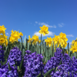 Spring Cleanse for Body and Mind